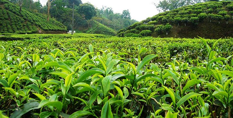 địa danh du lịch bangladesh