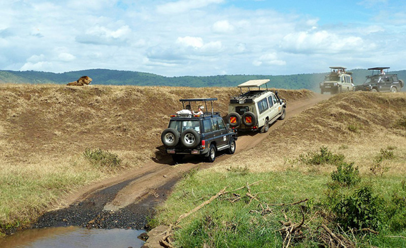 safari châu phi
