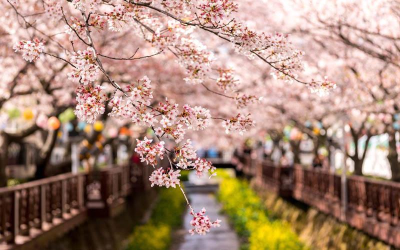 Du lịch Hàn Quốc tháng 3