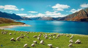 Kinh nghiệm du lịch New Zealand