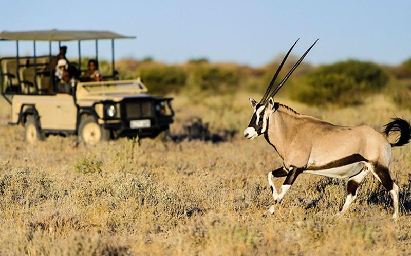 tour safari châu phi