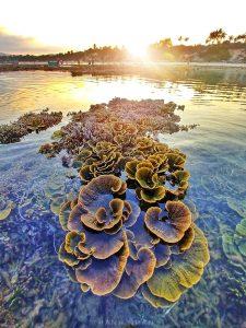Bật Mí Vườn San Hô Trên Cạn Ở Hòn Yến- Phú Yên