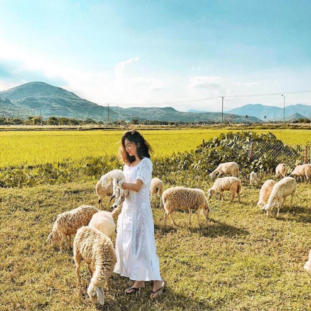 Đồi cừu Vũng Tàu – địa điểm check in chất từng centimet